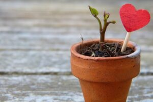 seedling emerges from flower pot with heart lollipop next to it in the soil